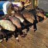 Cooking wild goose