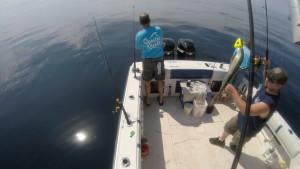 Setting up to shark fish