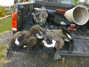 Resident goose season
