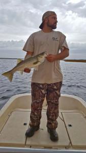 Schoolie rockfish